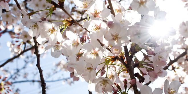 春の訪れと、別れ。
